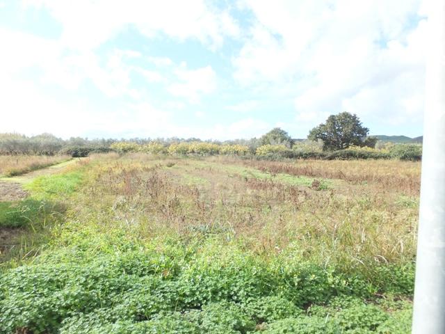 Terreno vendita SELLIA MARINA (CZ) - 99 LOCALI - 500 MQ